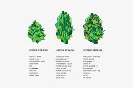 Sativa Indica Strain Chart The Ultimate Guide To Weed Strains Highsnobiety