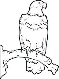 Coloring Page Of An Eagle Hungry Bald Eagle Eat Coloring Page