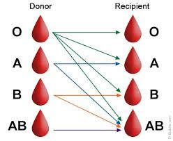Blood Group Combination Chart Blood Types Chart