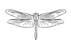 Small Picture Free Dragonfly Animal Coloring Page For Kids Animal Coloring