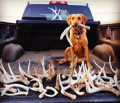 sporting dog days september 22 23 noon 4pm