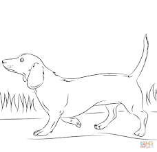 Dachshund Coloring Pages Dachshund Dog Coloring Page Free Printable