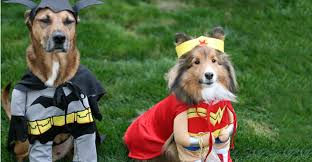 Delightful Halloween: Not Just For Humans Canine Costumes That Will Turn Heads. Dog  Halloween Costumes