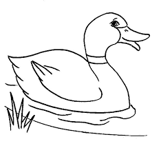 Small Picture duck colouring pages coloring Pages Pinterest Free printable