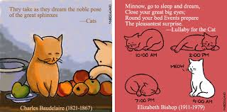 "a cartoon tribute to cats and the poets who loved them"" for npr  npr cat sample"