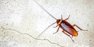 How <b>Cockroaches</b> Can Make <b>You</b> Sick :: AllergyandAir.com