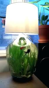 betta fish tank designs elegant tanks ideas interior and furniture layouts pictures best top decoration o