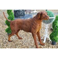 tucker cast iron dog garden statue