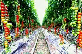 vegetable garden layout ideas beginners for beginner design