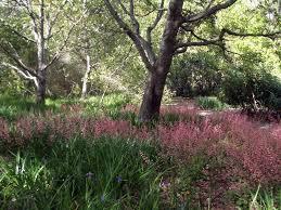 rancho santa ana botanic garden california