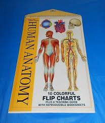 Anatomy Flip Charts Human Anatomy Flip Chart 2003 Spiral Mcgraw Hill