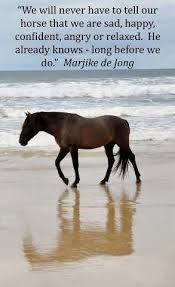 Horse Shipping Quotes Best Free Horses Quotes Managementdynamics