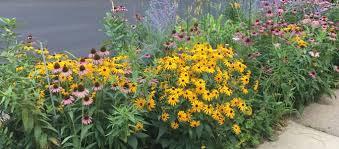 best low maintenance hardy perennials