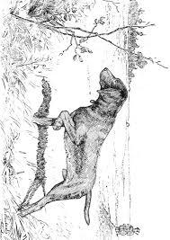 Disegno Da Colorare Cane Da Caccia Cat 9762 Images
