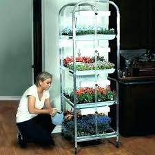 indoor plant stand with grow light best growing indoors images on seeds planting seeds lighting beautiful