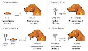 Example Of Classical Conditioning Classical Conditioning Learning Theories Resource Guide