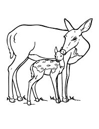 Small Picture Deer And Fawn Coloring Page coloring 3 Pinterest Wood