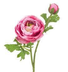 Das Fröschlein Unter Den Blumen Die Ranunkel Artfleur