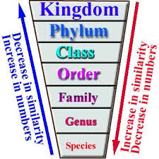 Animal Genus And Species Chart Toxonomy Of Living Things