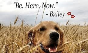 a dog s purpose bailey. Exellent Bailey Frances Winston Reviews The Tugatyourheartstrings Film A Dogu0027s Purpose For Dog S Bailey O