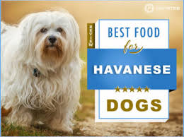 Havanese Growth Chart The 6 Best Foods To Feed Your Adult And Puppy Havanese