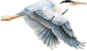 flying blue heron wall sculpture bovano of cheshire all