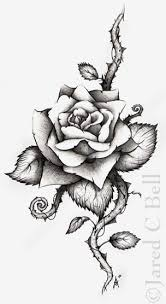 Small Picture Drawn rose rose thorn Pencil and in color drawn rose rose thorn