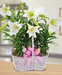 Basket Flower Decoration Fresh Easter Flower Basket Arrangements 17723