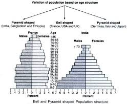 essay on human population definition growth growth models and bell and pyramid shaped population structure