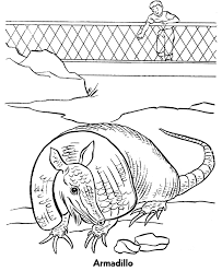 Small Picture Zoo Animal Coloring Pages Zoo Armadillo Exhibit Coloring Page