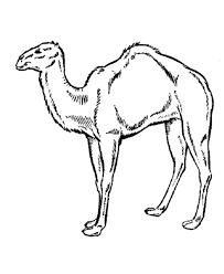 Small Picture Camel In A Camel Caravan Coloring Page Coloring Home
