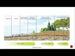 Primary And Secondary Succession Venn Diagram Primary And Secondary Succession Youtube