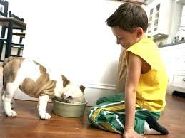pet friendly rugs pet friendly area rugs pet friendly rugs best pet friendly area rugs magnificent