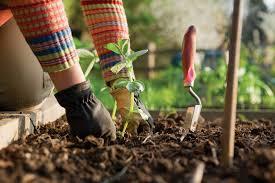 8 IMPORTANT FALL GARDENING TIPS  Danielu0027s Lawn U0026 Garden Center Fall Gardening