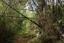 photo essay s last remnant of intact atlantic forest trail through atlantic forest in southeastern the forest here experiences more distinct seasons than the true tropical rainforests further north