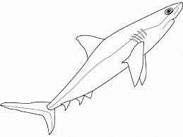 Small Picture Best Wild Shark Coloring Pages Womanmatecom