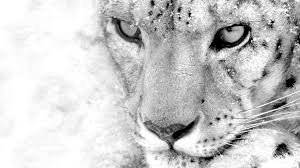 Free download Snow Leopard Iphone ...