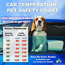 Car Temperature Pet Safety Chart Make Sure To Keep Your