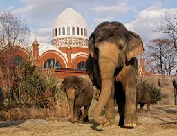 don t miss attraction cincinnati zoo and botanical garden