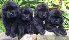 Dewayne Yoder | Lancaster Puppies