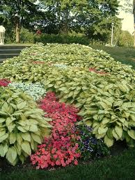Small Picture 108 best hostas images on Pinterest Shade plants Plants and