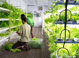 podponics inc will start growing watercress arugula and other lettuce varieties hydroponically near atlanta s