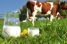 Znalezione obrazy dla zapytania mleko i przetwory mleczne