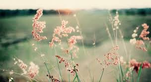 Blume Zitate Sprüche Und Weisheiten Weise Wortwahl