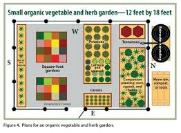 10 steps to vegetable garden success