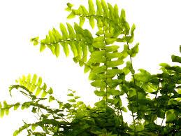 Die Energetische Wirkung Von Zimmerpflanzen