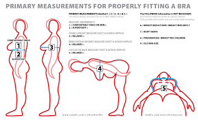 normal picture size how to measure bra size
