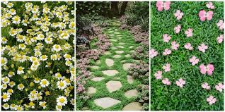 best garden plants. Best Ground Cover Flowers Garden Plants A