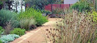 plant natives in your garden
