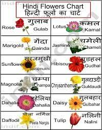 Flower Chart In English Flowers Name Chart Hindi And English Best Flower Site